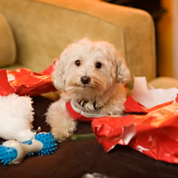 5 of the Best Gift Ideas for your Dog this Christmas