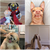 The Cutest Dogs on Instagram